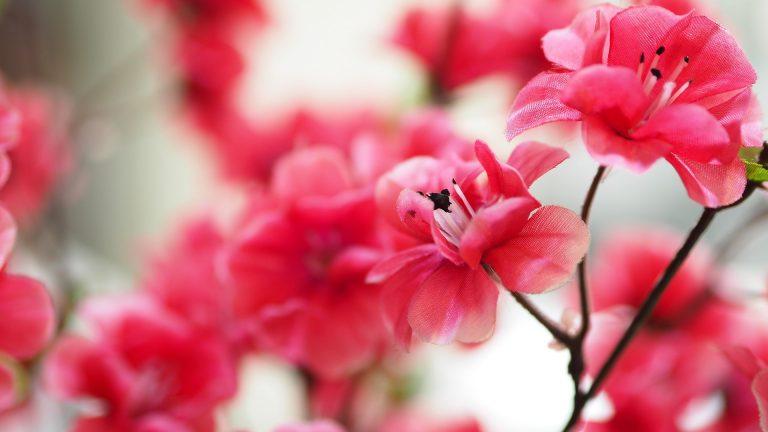 Dlaczego warto kupować sztuczne kwiaty?